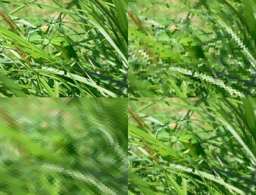 Un-software-muestra-como-ven-los-animales_image_380