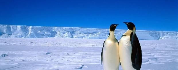 Antártida-penguin-ViajaryViajar-620x245