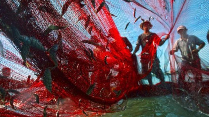 Pesca excesiva es una de los peligros que amenaza los mares.