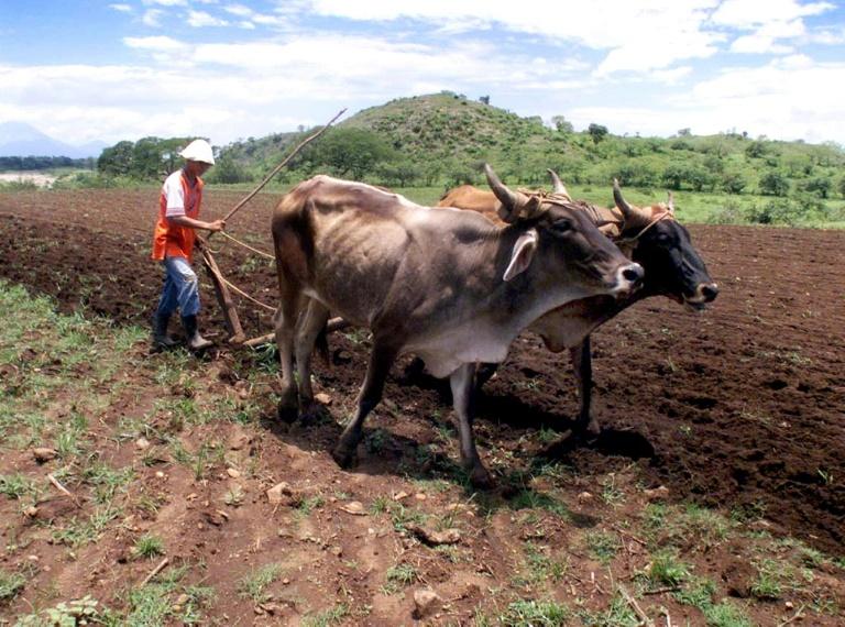 FAO anuncia aporte apoyo contra cambio climático
