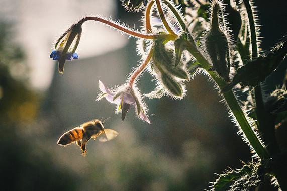 El-SOS-de-las-abejas-ante-el-cambio-climatico_image_380