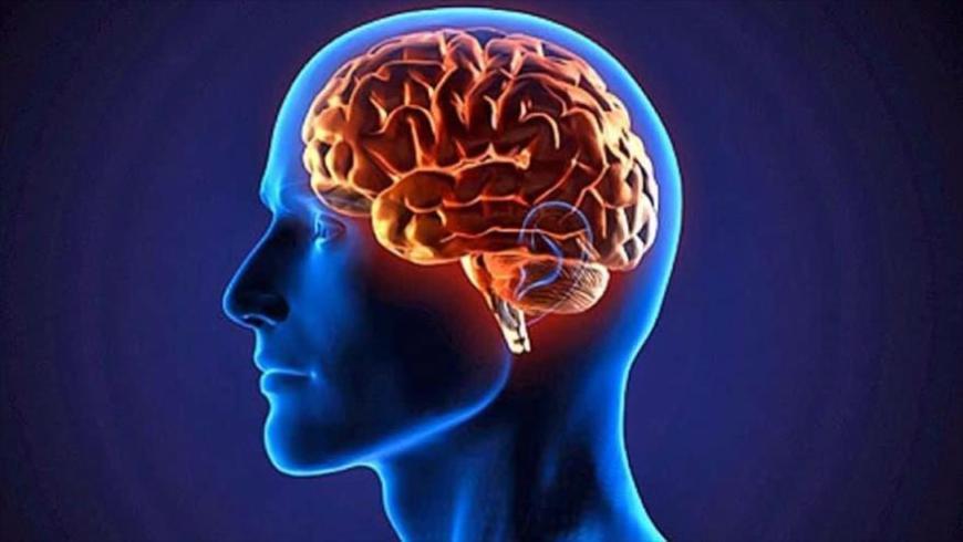 Descubren en el cerebro estructuras con hasta 11 dimensiones.