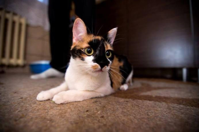 bona pisici 1