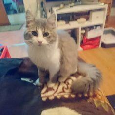 bona pisici 4