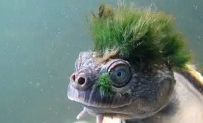 tartaruga-punk