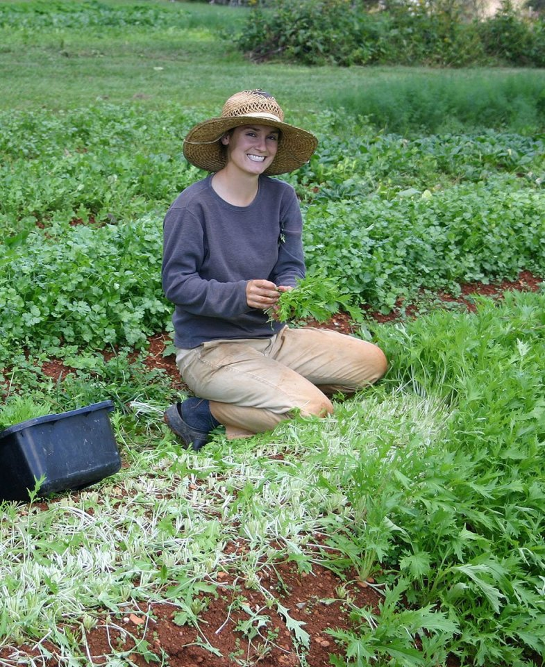 Small christy harvest mizuna ayrshire