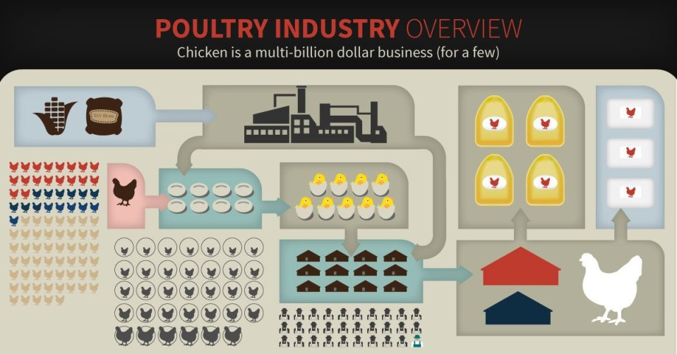 PoultryIndustry-1200