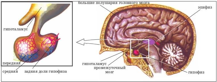 Аденома гипофиза головного мозга симптомы причины и лечение