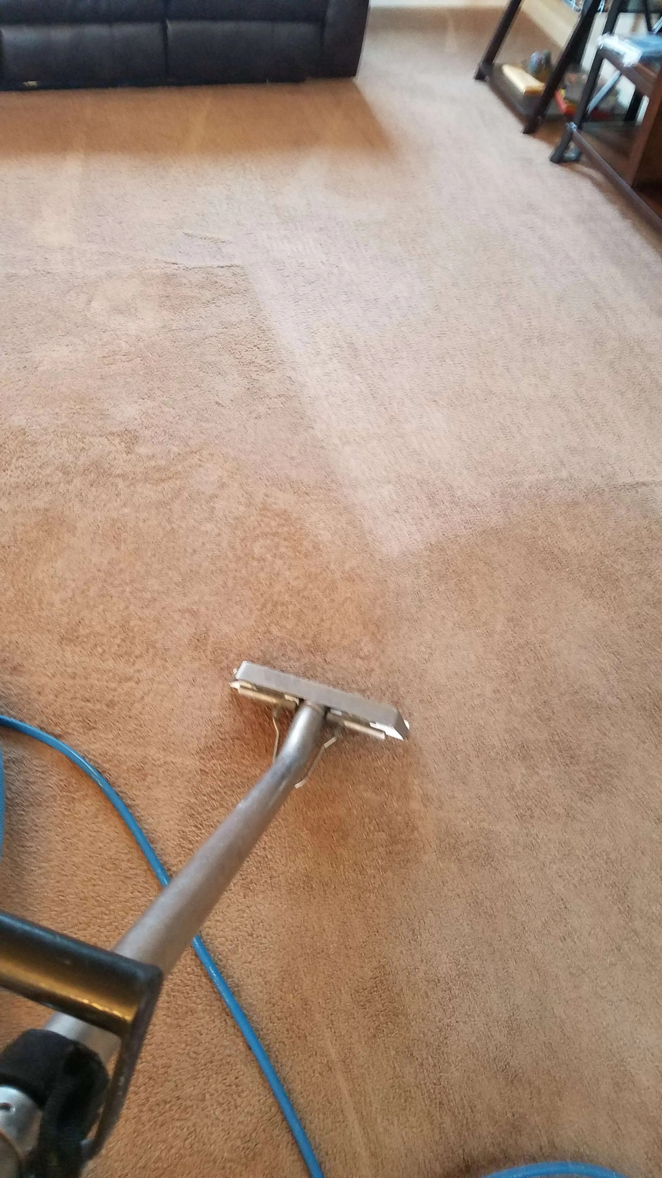 Carpet Cleaning Best Carpet Cleaning Company In Corvallis Albany Oregon