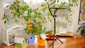 BirdhousesAndBathAllBig