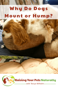Why Do Dogs Mount or Hump? | How To Stop a Dog From Humping