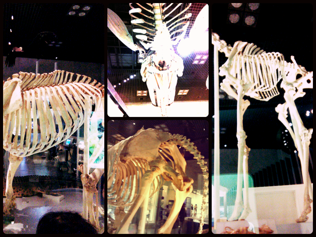 National Museum of Nature and Science 国立科学博物館 : Tokyo for JPY 1000 or less. Skeletons of big animals