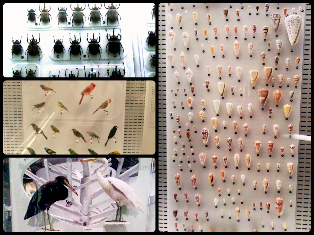 National Museum of Nature and Science 国立科学博物館 : Tokyo for JPY 1000 or less. Bugs, Birds and Shells