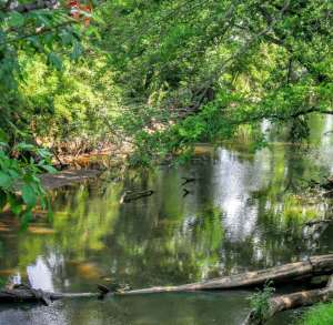 Discover Raleigh's Streams This Summer @ Walnut Creek Wetland Center  | Raleigh | North Carolina | United States