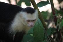 MonkeyMABeach