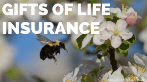 Gifts of life insurance, bumble bee