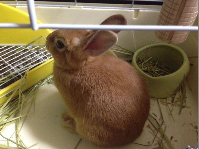 ウサギ181