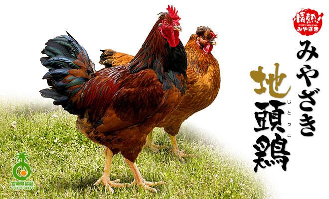 地鶏381