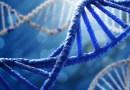 Gen Düzenleyici Ağlar