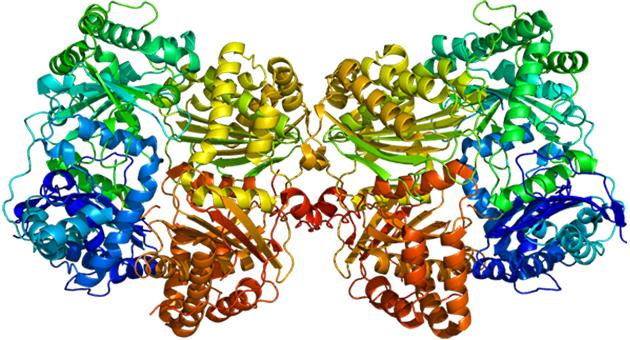 insulin_degrading_enzyme_3