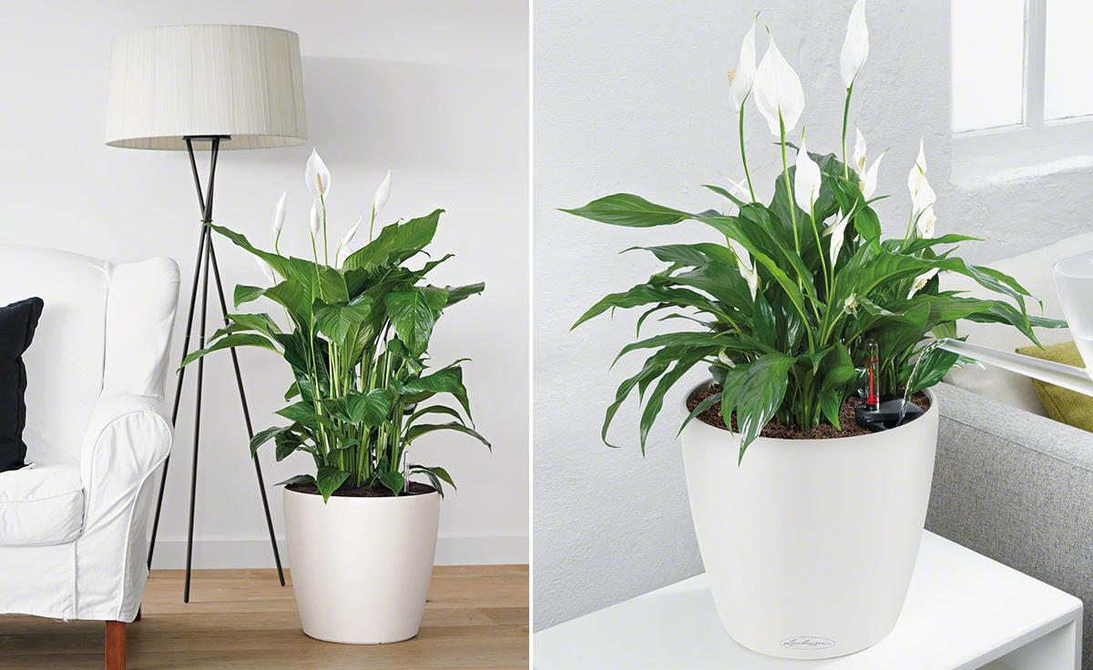 Schlafzimmer Pflanzen Feng Shui | Besser Leben Mit Feng Shui