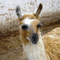 Tiny House and 'Normal House' Living - Pros and Cons (May Contain Llamas)