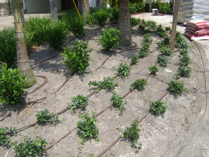 Drip Irrigation Ravenscourt Landscaping \ Design LLC - garden irrigation design