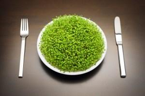 Awesome Benefits of Detox Superfood Chlorella