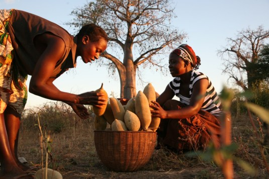 ladies-with-baobab-fruit