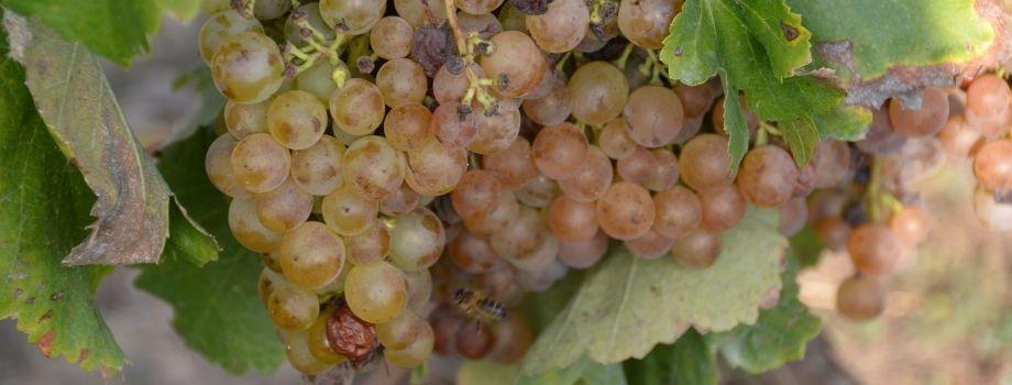 El Vino Ecológico, ¿prosa o poema?
