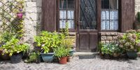 Front Door Plants You Can't Kill - Potted Plants That Are ...