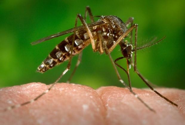 OMS estuda declarar emergência mundial pelo vírus zika