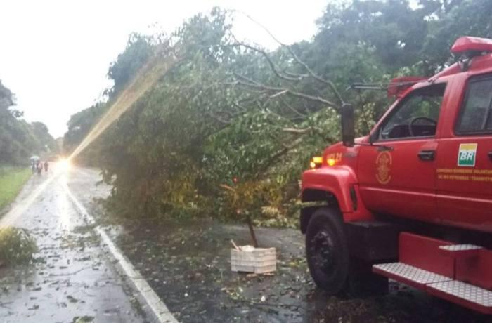 Defesa Civil registra quedas de árvores em rodovias no norte de SC