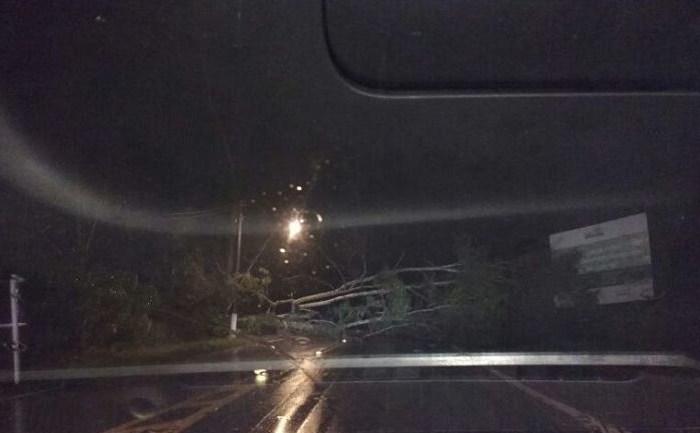 Bombeiros registram queda de árvore na BR-280, no trevo de acesso ao município de Corupá