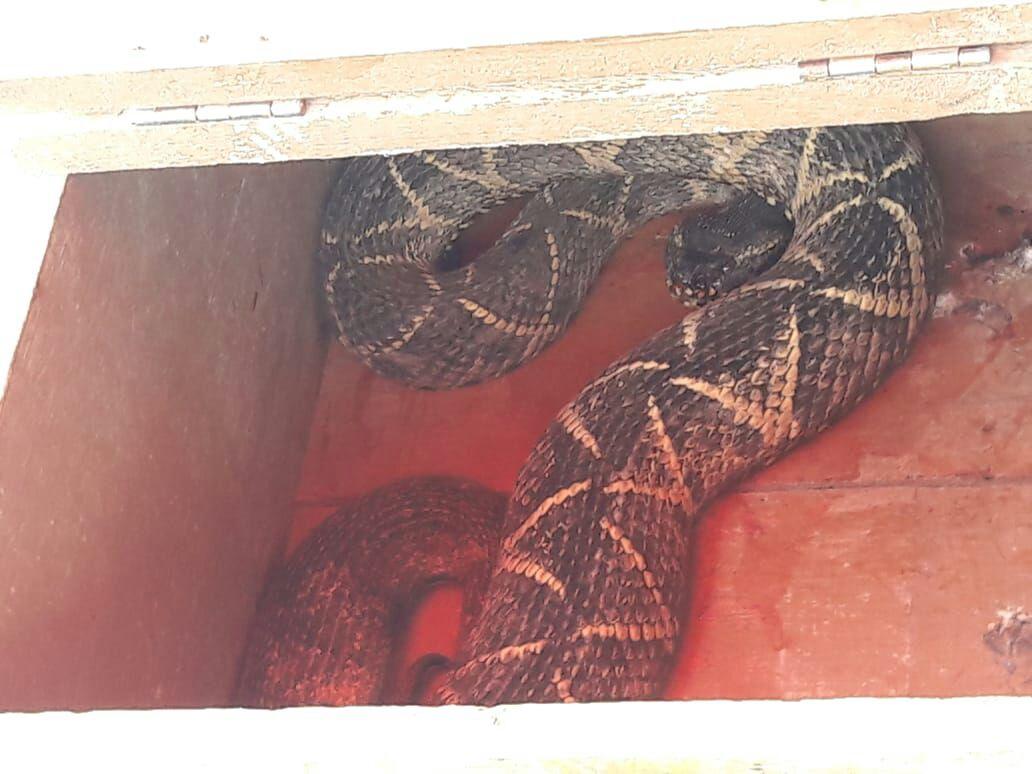 Animal foi capturado às 12h13 desta sexta-feira l Foto CBV/Divulgação