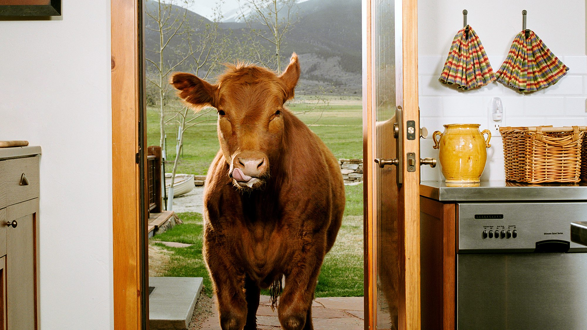 What To Buy For Housewarming Party Housewarming Party Traditions From Cows To Haint Blue Realtor