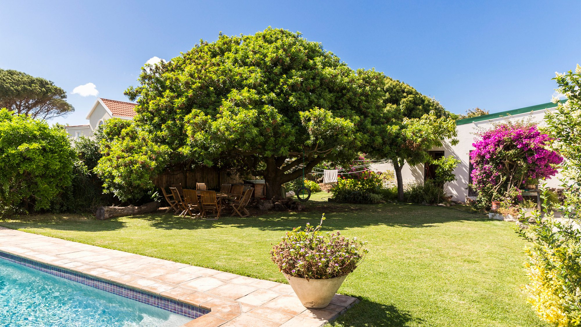 Garden Trees 7 Reasons To Think Twice Before Buying A House With Big Trees