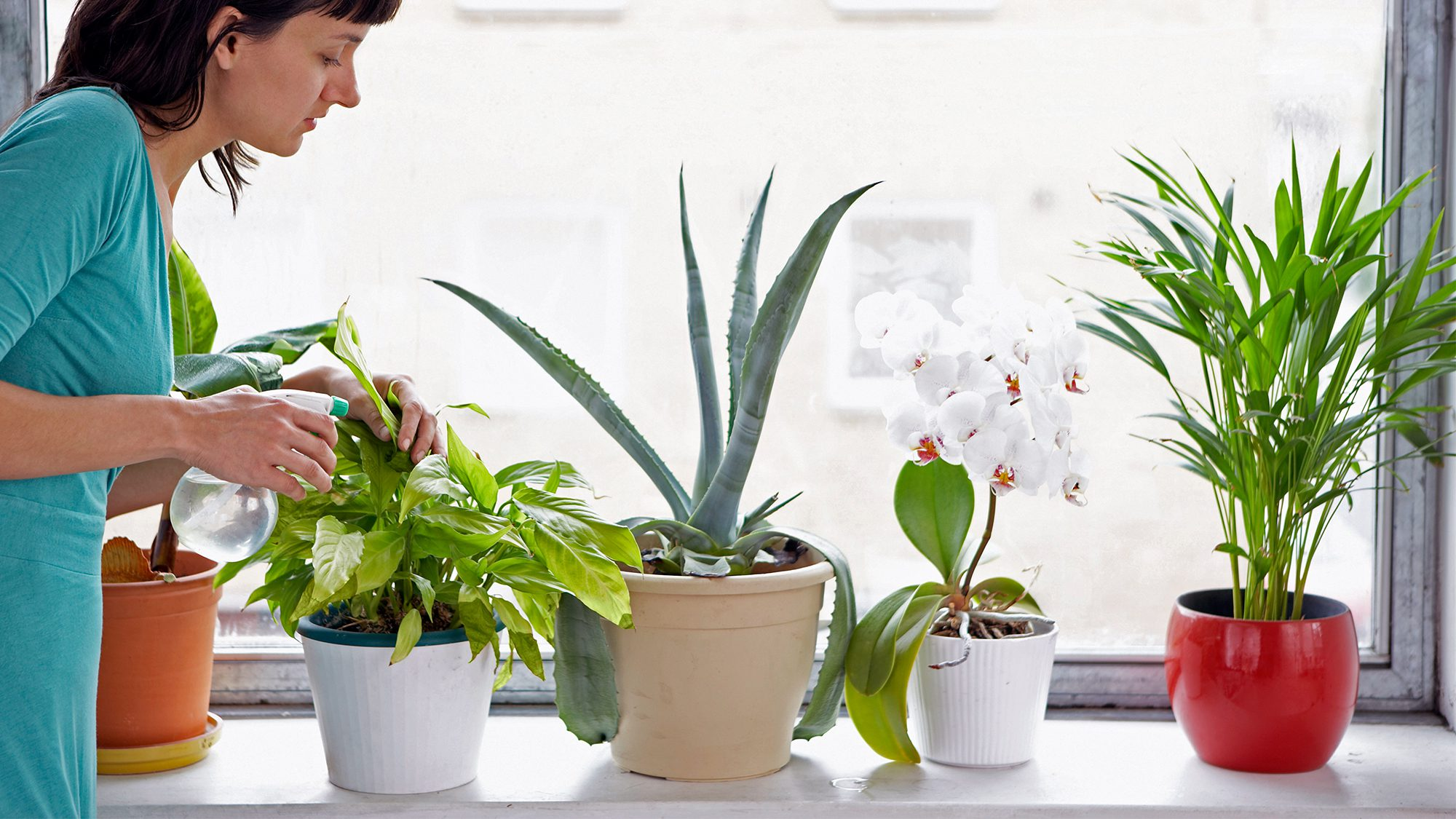 How To Plant Indoor Plants How To Cultivate Indoor Plants In The Concrete Jungle