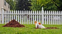 Help, My Dogs Are Wrecking My Yard!   Realtor.com