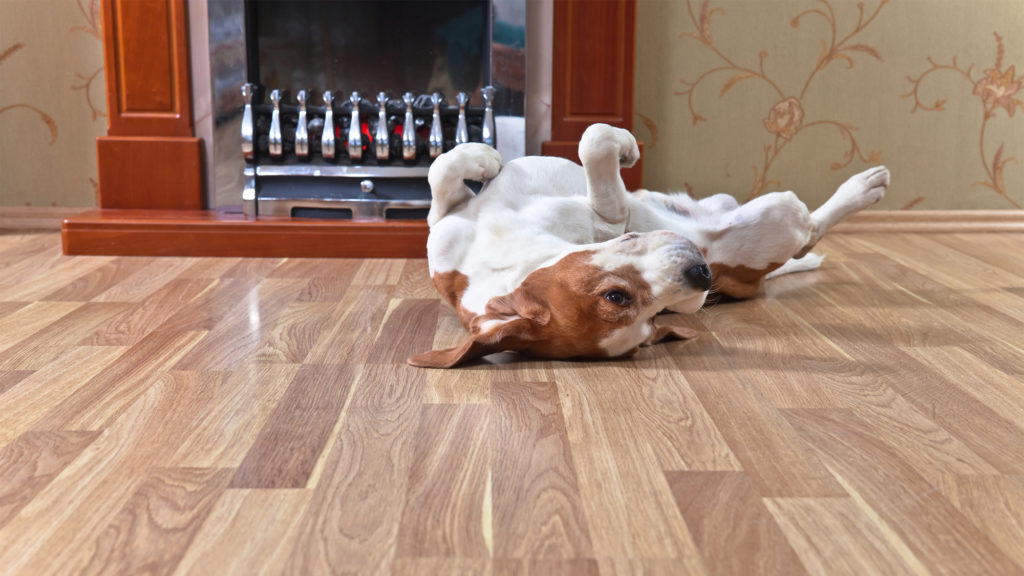 What Is The Best Flooring For Dogs And Other House Pets