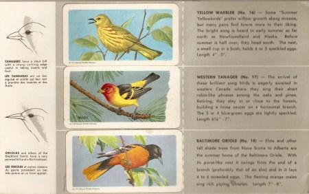 Edmonton Bird Sounds