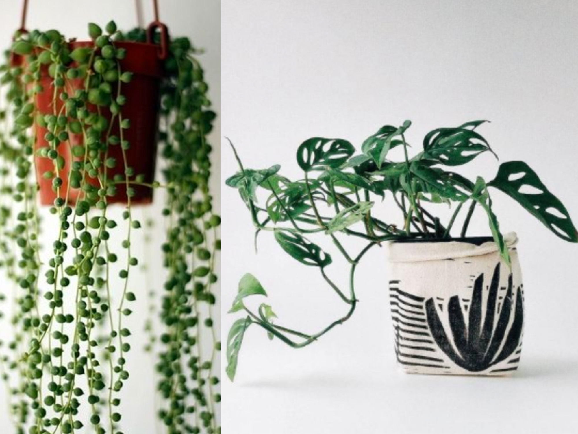 How To Plant Indoor Plants How To Grow Your Indoor Plants In Water Realestate Au