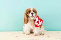 PETS: Beanie Baby Dog