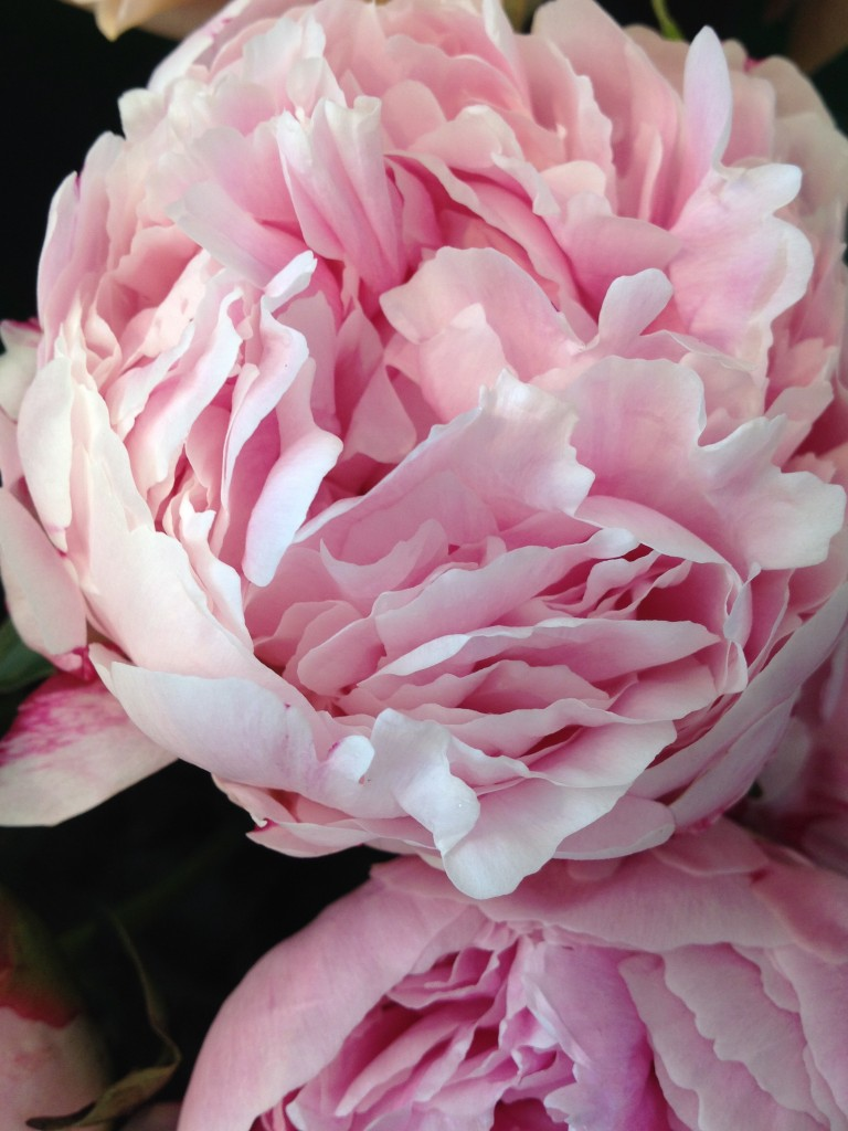 Pianese Flowers Peony Alternatives For Your Wedding