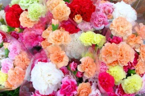 carnation_iroiro.jpg