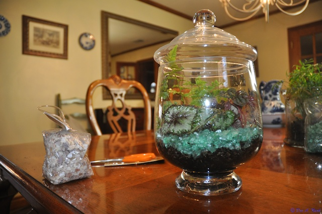 Terrariums are easy to build and enjoy