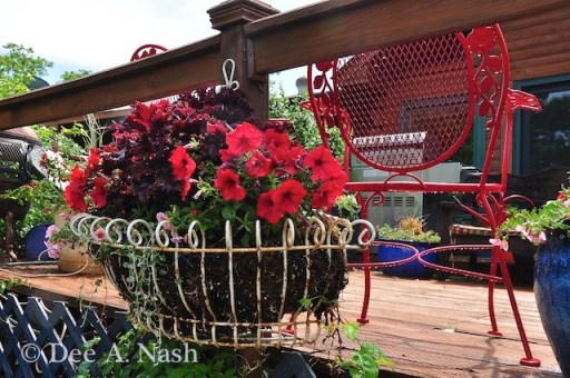A lot is going on in this container. Red petunias, a dark coleus, red trailing verbena and peachy pink calibrochoa. I added 'Silver Falls' dichondra.