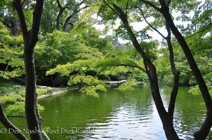 One of my goals is to see the Japanese garden at the Ft. Worth Botanic Garden in fall when all of the maples turn.