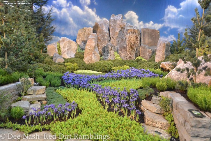This show garden, The Tiny Tetons, won a gold medal at the Northwest Flower and Garden Show. What looks like blue sky is actually a backdrop, and the Snake River is composed of tiny Iris reticulata. It's a very clever three-dimensional trompe l'oeil. Kind of.