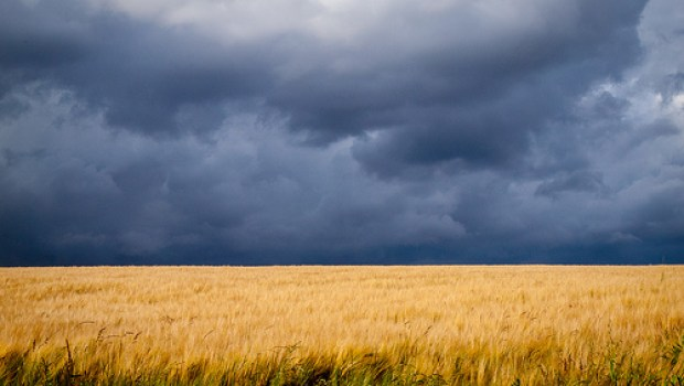 storm-over-wheatfield-monsanto-by-anguskirk